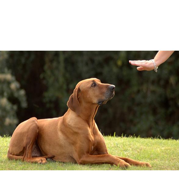 addestramento-cani-.png