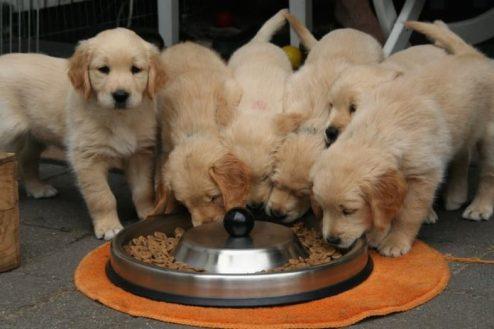 traffico-illegale-di-cuccioli-696x464.jpg